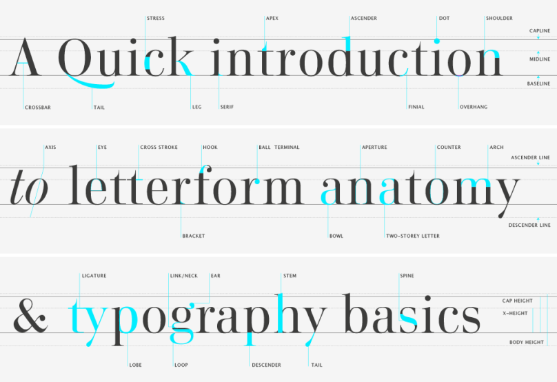 Type Glossary Letterform Anatomy